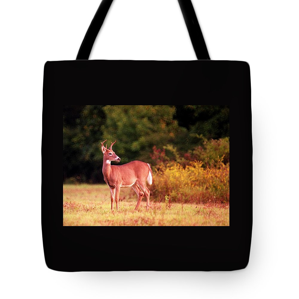 Deer Tote Bag featuring the photograph 070406-58 by Mike Davis