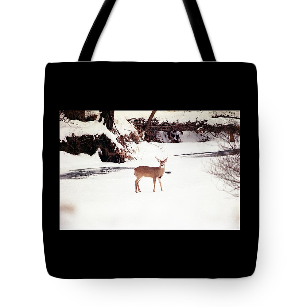 Whitetail Deer Tote Bag featuring the photograph 080706-89 by Mike Davis