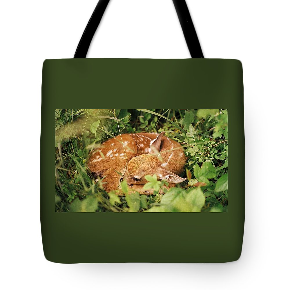 Deer Tote Bag featuring the photograph 080806-17 by Mike Davis