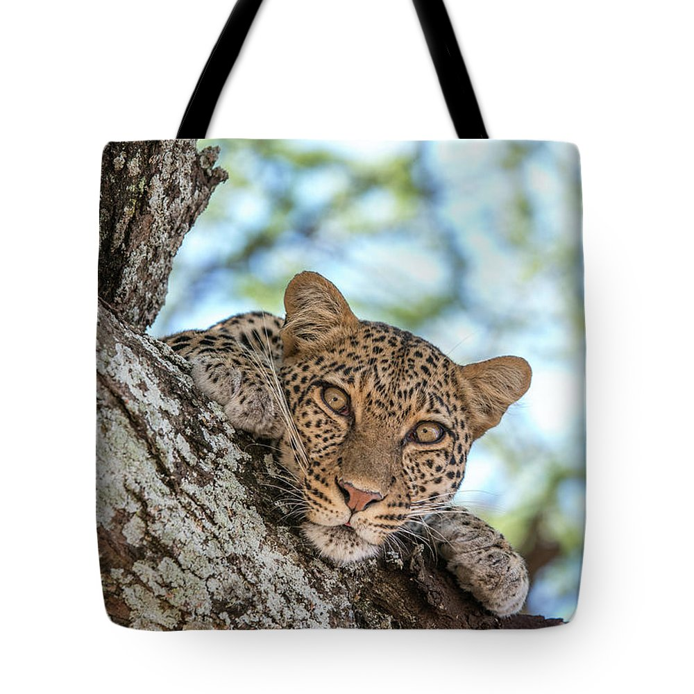 Animal Behavior Tote Bag featuring the photograph A Leopard, Panthera Pardus, Resting by Tom Murphy