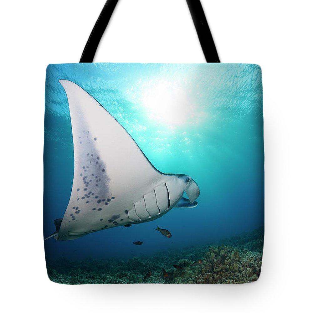 Cartilaginous Tote Bag featuring the photograph A Reef Manta Ray Manta Alfredi by Dave Fleetham