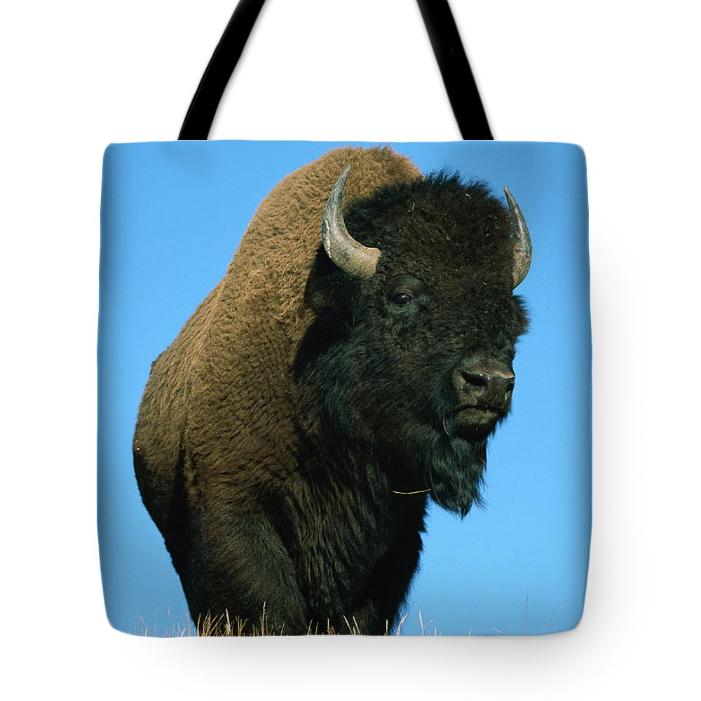 American Bison Tote Bag featuring the photograph American Bison Bull by Ingo Arndt