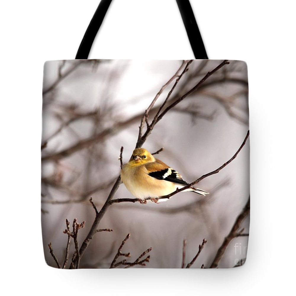 Mccombie Tote Bag featuring the photograph American Goldfinch In Winter by J McCombie