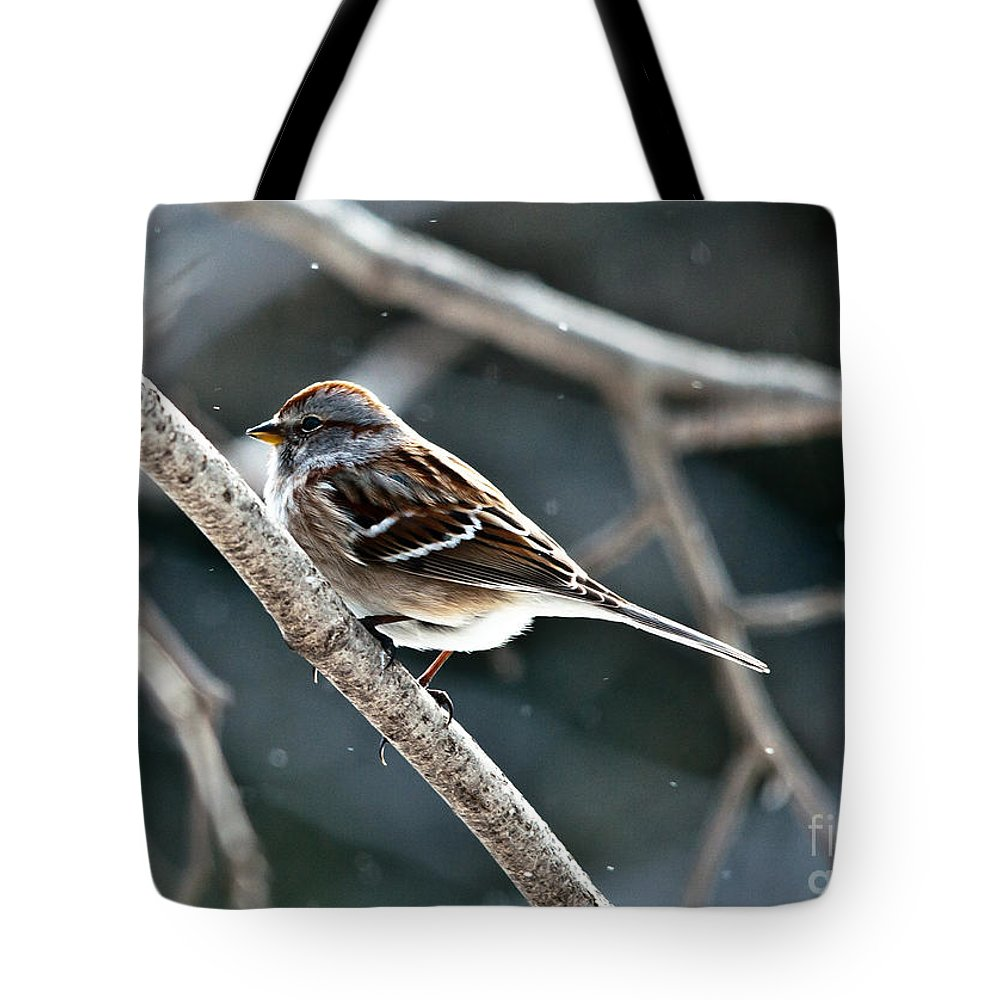 Landscapes Tote Bag featuring the photograph American Tree Sparrow by Cheryl Baxter