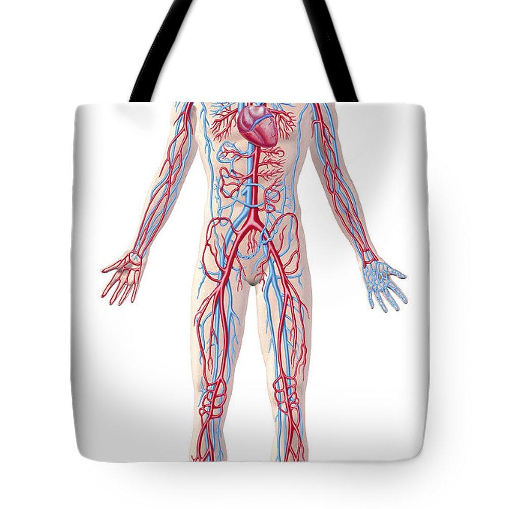 Coronary Sinus Tote Bags | Fine Art America