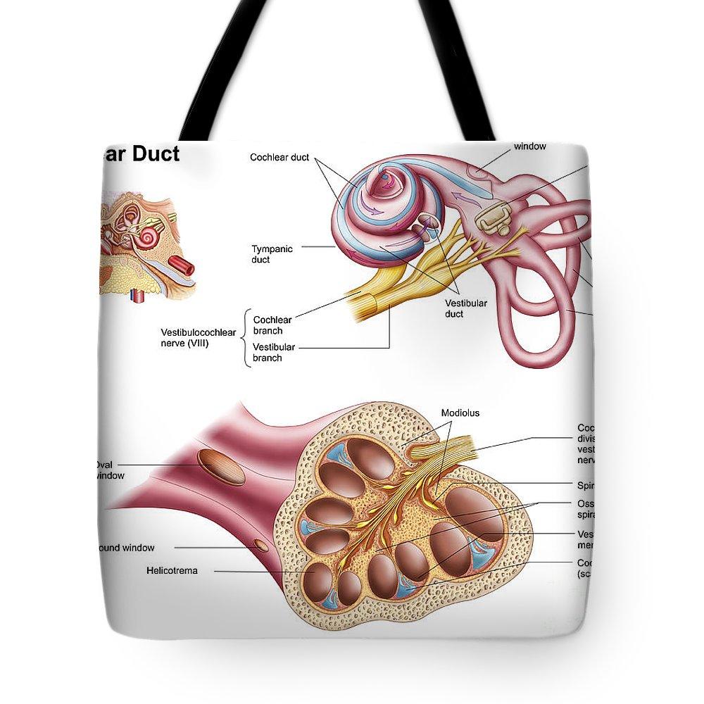 Ear Drum Tote Bags | Fine Art America