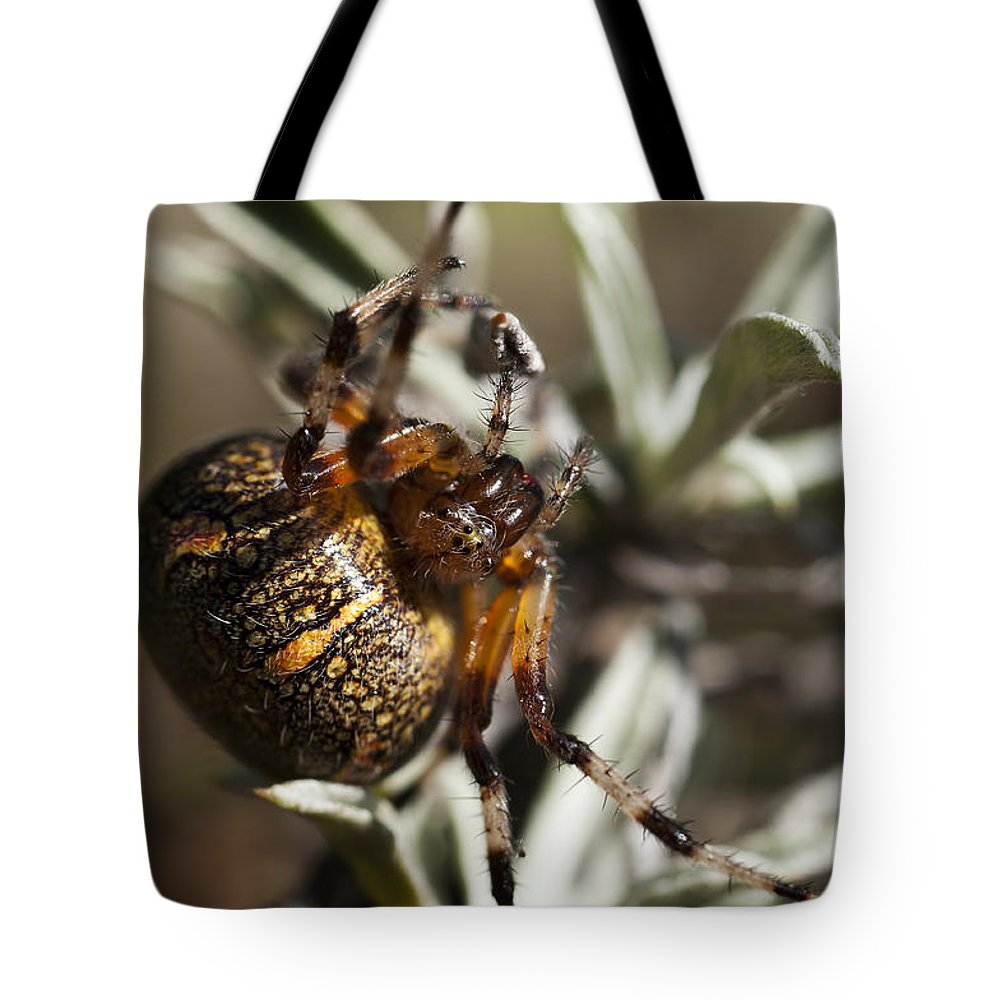 Orb Weaver Tote Bag featuring the photograph Arachnophobia by Ted Raynor