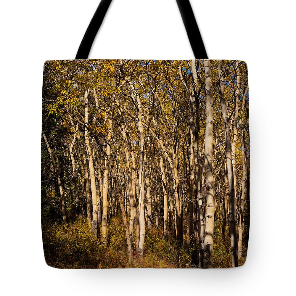 Populus Tote Bag featuring the photograph Aspen Forest In Fall by Stephan Pietzko