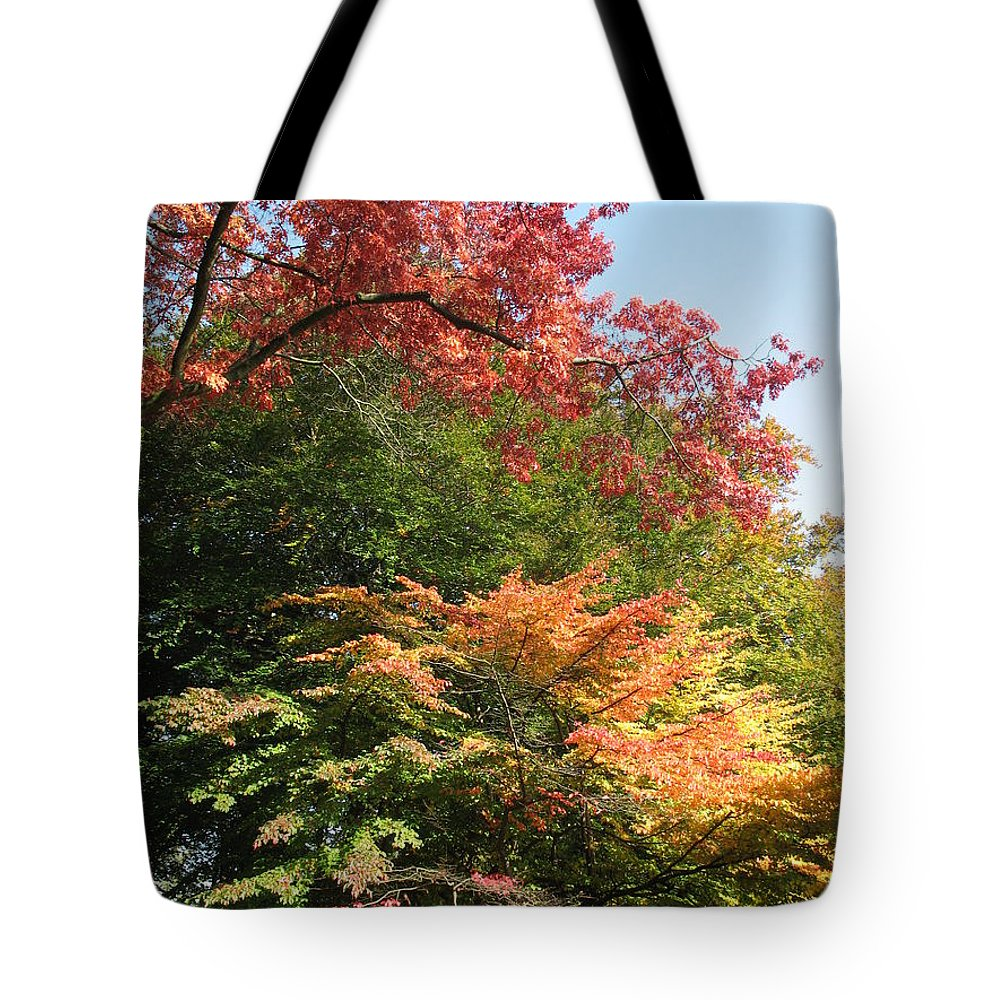 Trees Tote Bag featuring the photograph Autumn Colors by Christiane Schulze Art And Photography