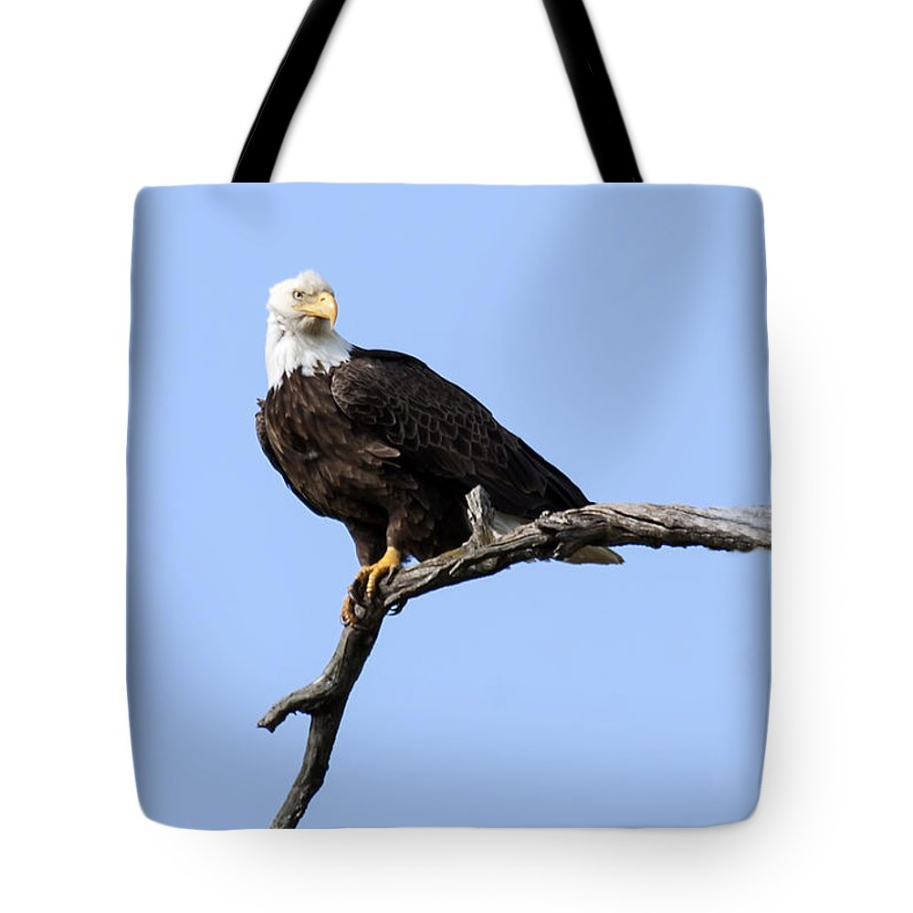 Eagle Tote Bag featuring the photograph Bald Eagle 7 by David Lester