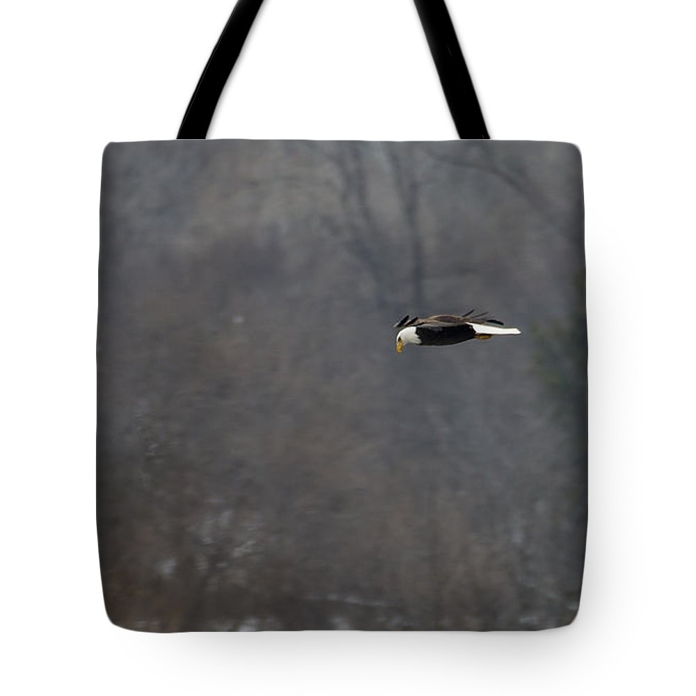 Birds Tote Bag featuring the photograph Bald Eagle 2 by Steven Ralser