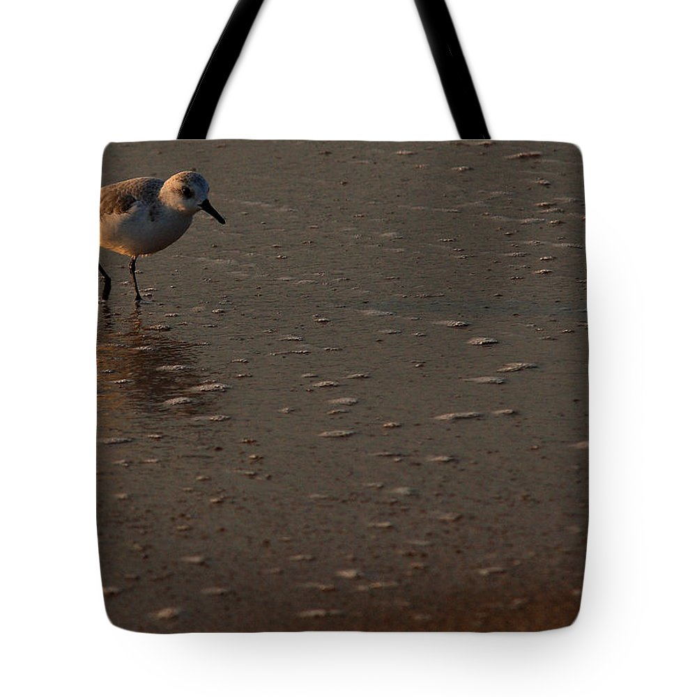 Wildlife Tote Bag featuring the photograph Beach Wildlife by David Dufresne