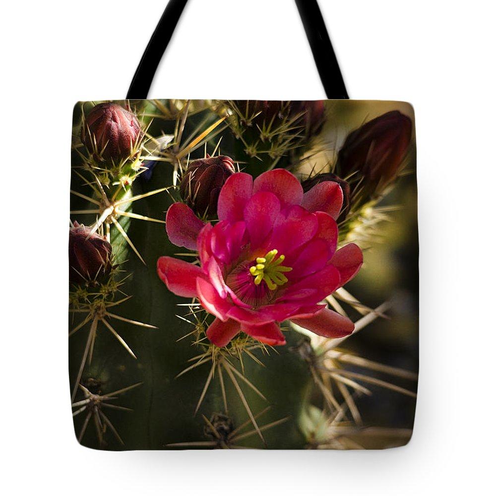 Arizona Tote Bag featuring the photograph Beauty In The Desert by Saija Lehtonen