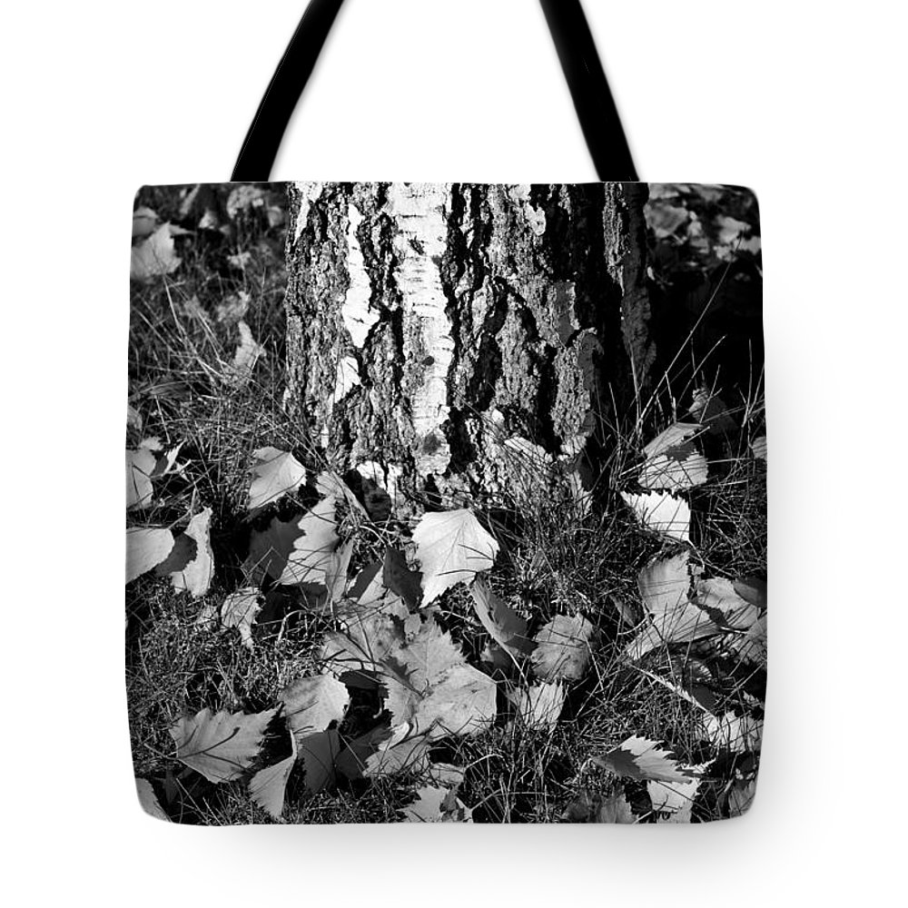 Autumn Tote Bag featuring the photograph Beech Tree by David Pyatt