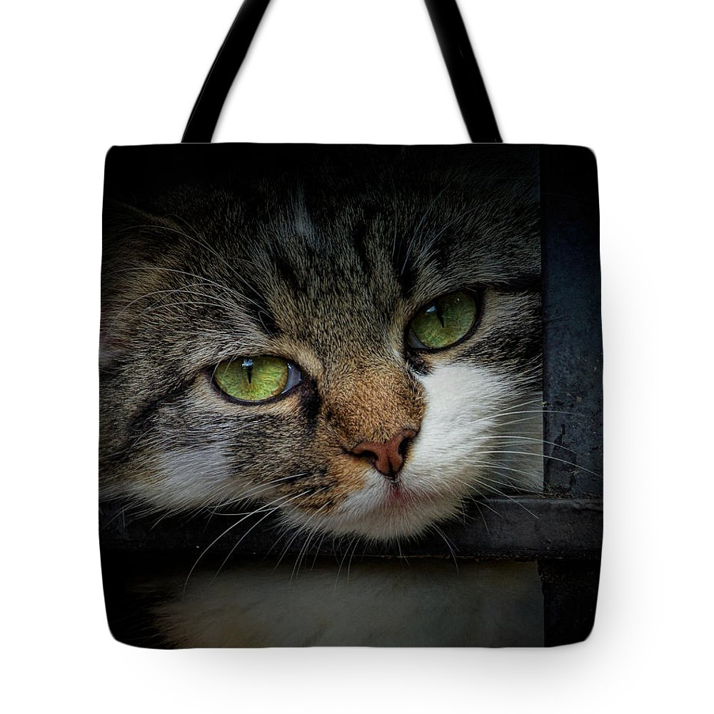 Animal Tote Bag featuring the photograph Behind Bars by Jai Johnson