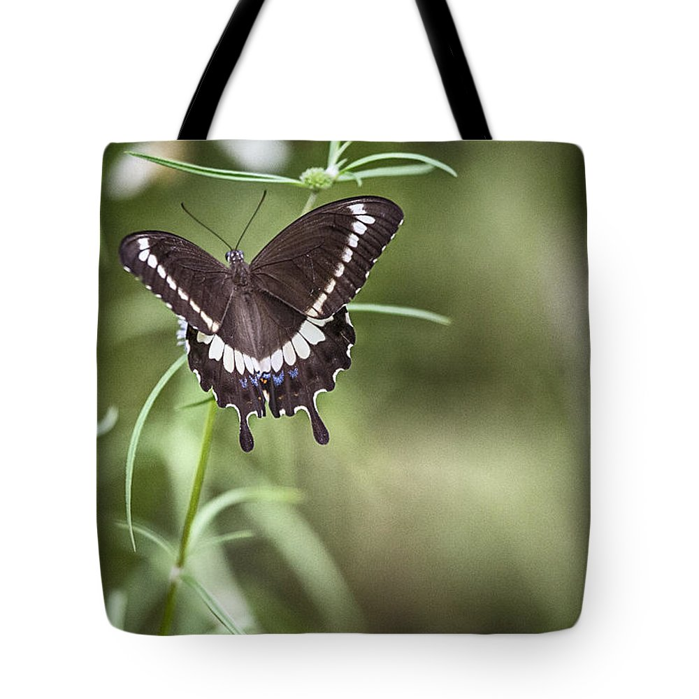 Butterfly Tote Bag featuring the photograph Black And White Butterfly V3 by Douglas Barnard