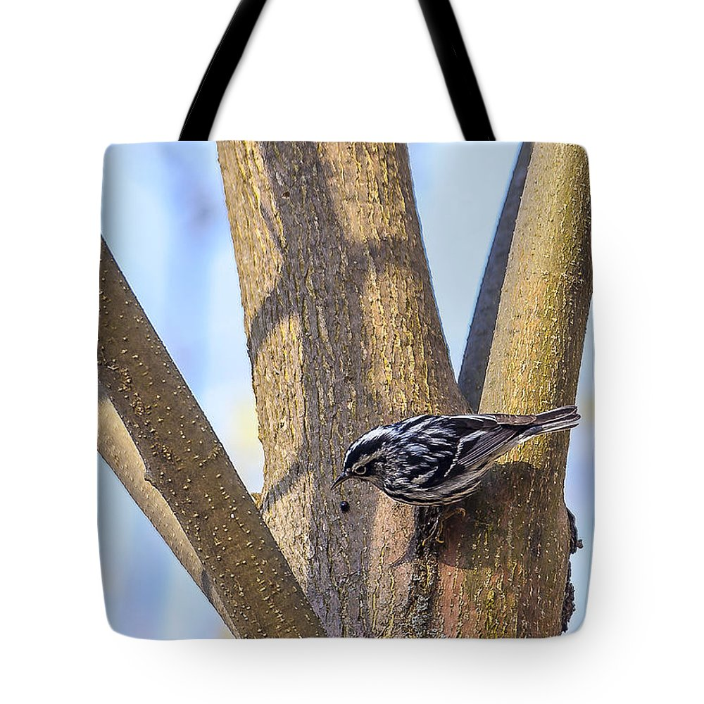 Animal Tote Bag featuring the photograph Black And White Warbler by Jack R Perry