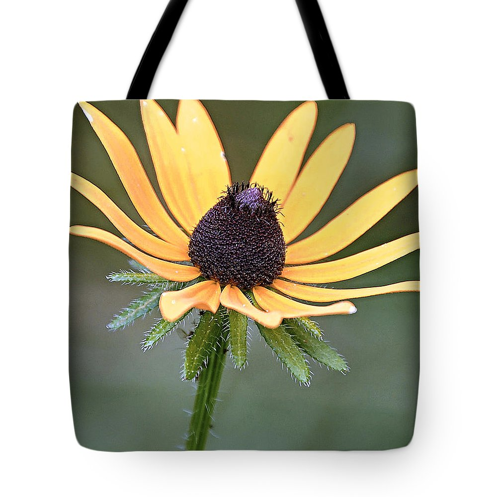 Pollen Tote Bag featuring the photograph black eyed Susan by Scott Staley