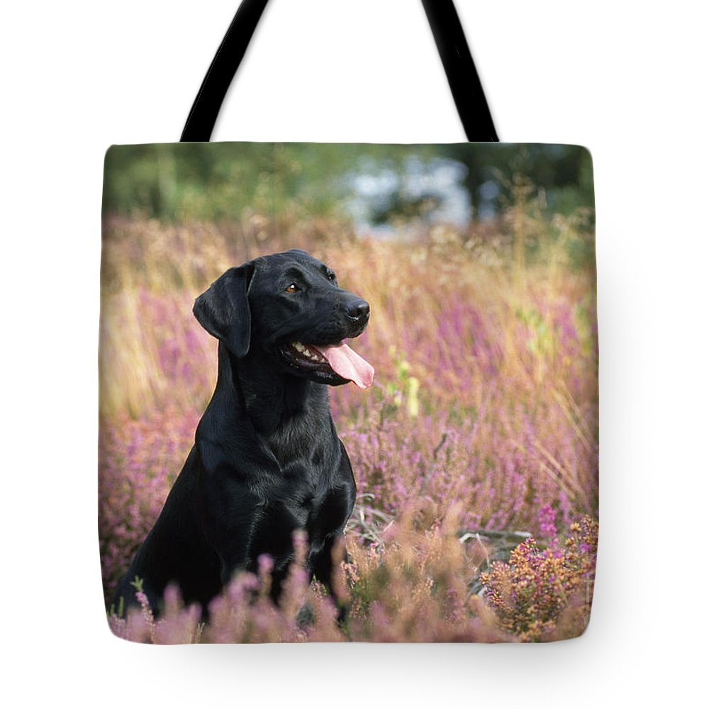 Black Labrador Tote Bag featuring the photograph Black Labrador Dog by John Daniels