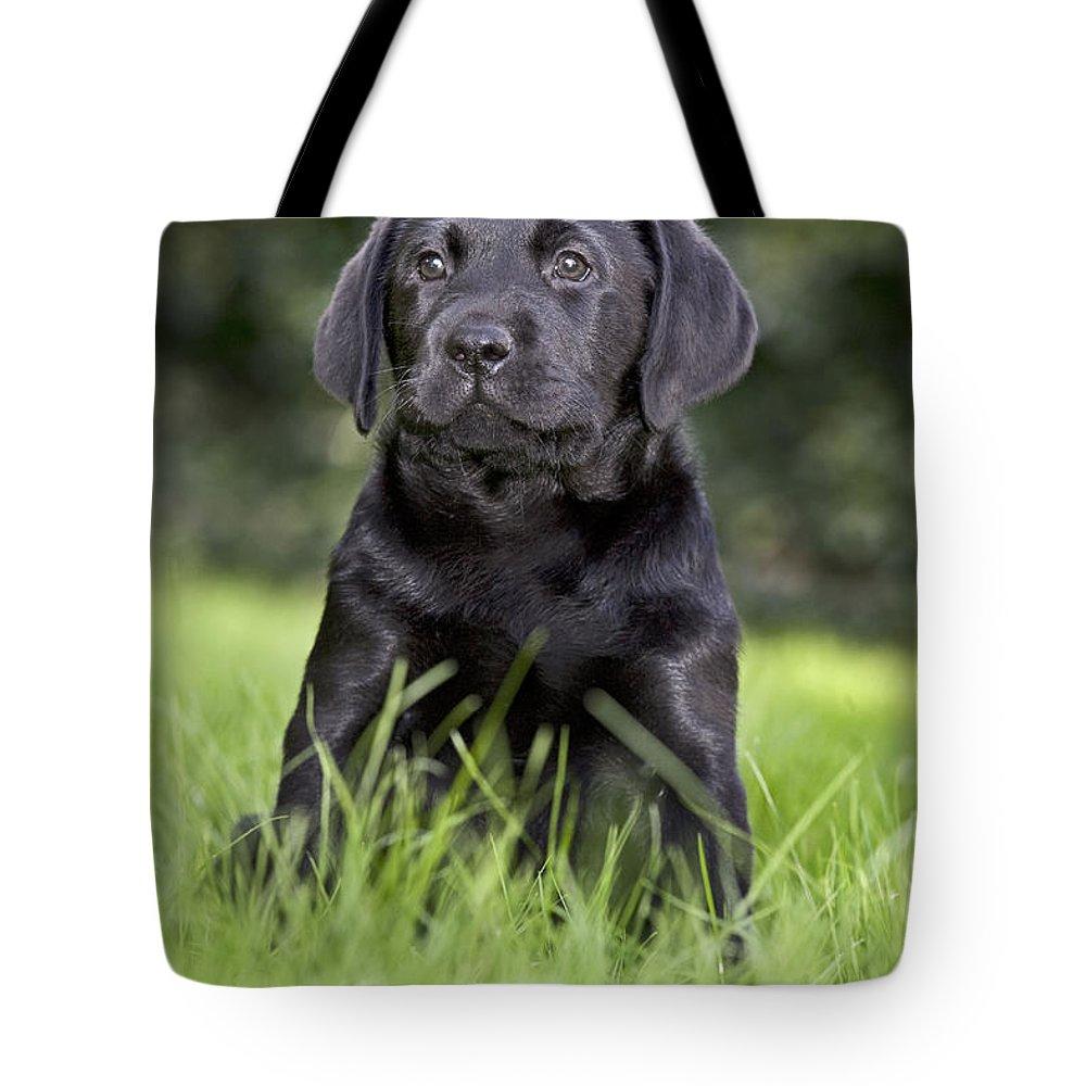 Labrador Retriever Tote Bag featuring the photograph Black Labrador Puppy by Johan De Meester