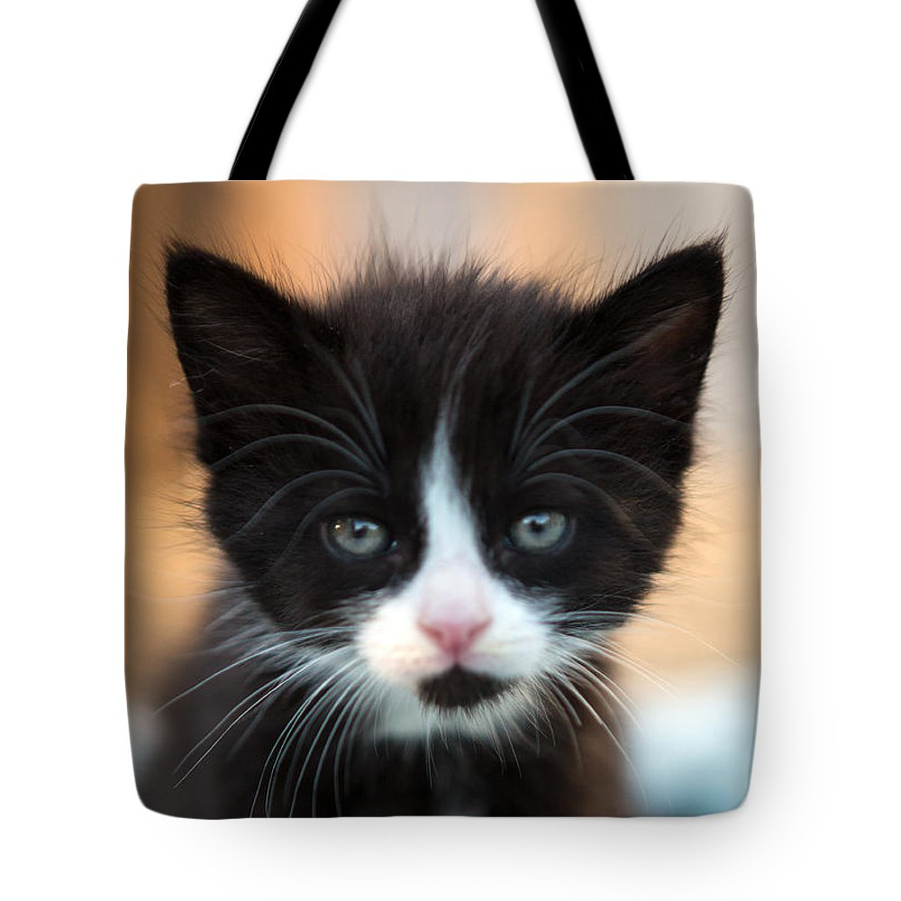 Black And White Cat Lifestyle Products