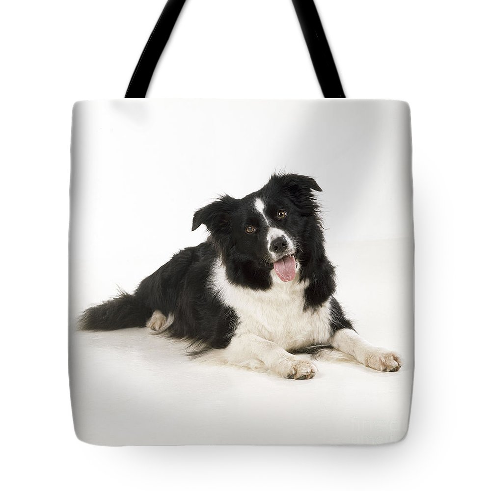 Border Collie Tote Bag featuring the photograph Border Collie Dog by John Daniels