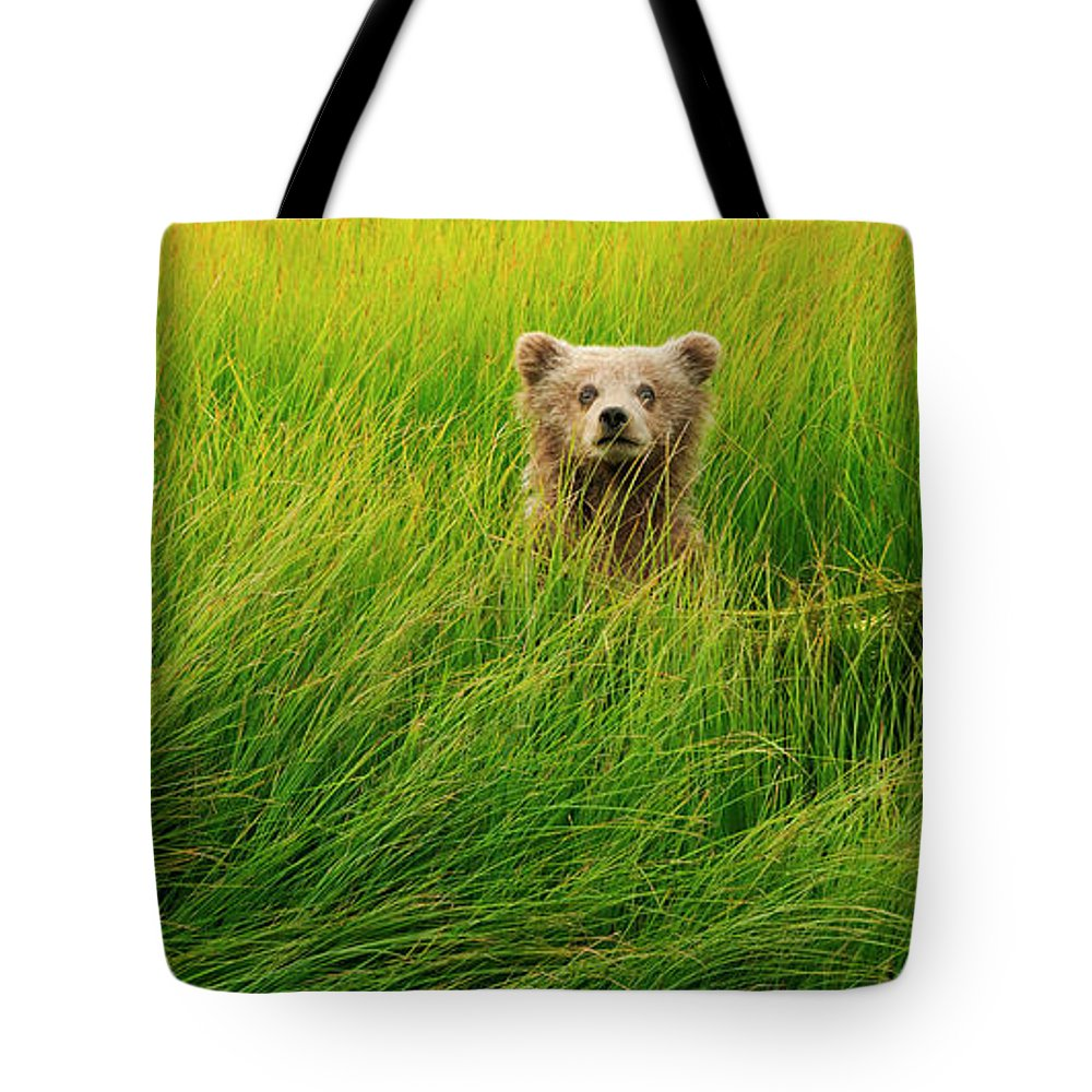 Brown Bear Tote Bag featuring the photograph Brown Bear Cub, Lake Clark National by Mint Images/ Art Wolfe