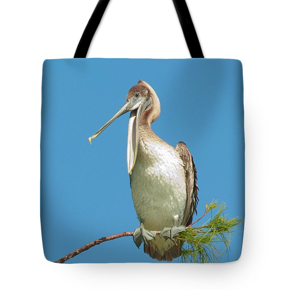 Brown Pelican Tote Bag featuring the photograph Brown Pelican by Anne Kitzman