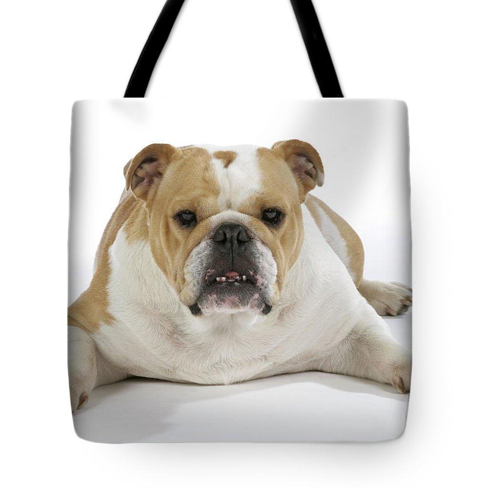 Bulldog Tote Bag featuring the photograph Bulldog, Female by John Daniels