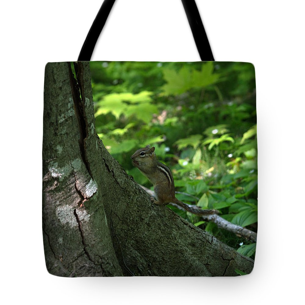 Chipmunk Tote Bag featuring the photograph Chipmunk by Linda Kerkau