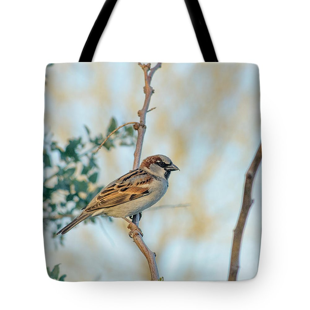 Chipping_sparrow Tote Bag featuring the photograph Chipping Sparrow by Tam Ryan