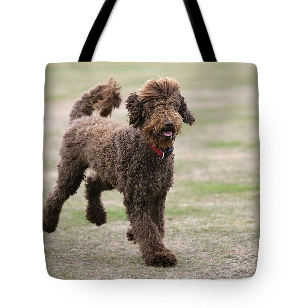 Labradoodle Tote Bag featuring the photograph Chocolate Labradoodle Running In Field by John Daniels