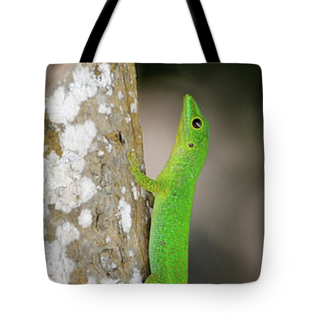 Photography Tote Bag featuring the photograph Close-up Of Seychelles Small Day Gecko by Animal Images