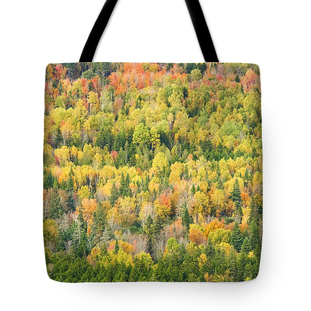 Landscape Tote Bag featuring the photograph Colorful Fall Forest Near Rangeley Maine by Keith Webber Jr