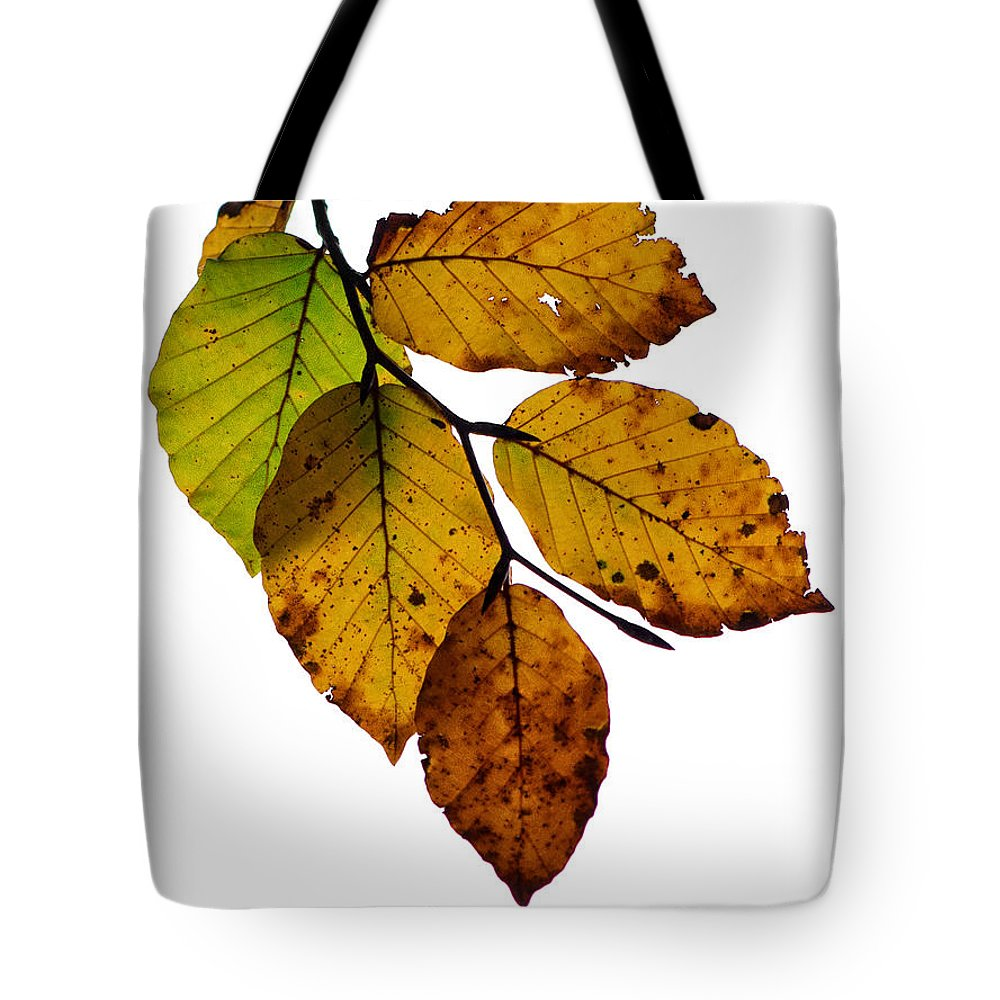 Hazel Tote Bag featuring the photograph Colorful Leaves Isolated On A White Background by TouTouke A Y