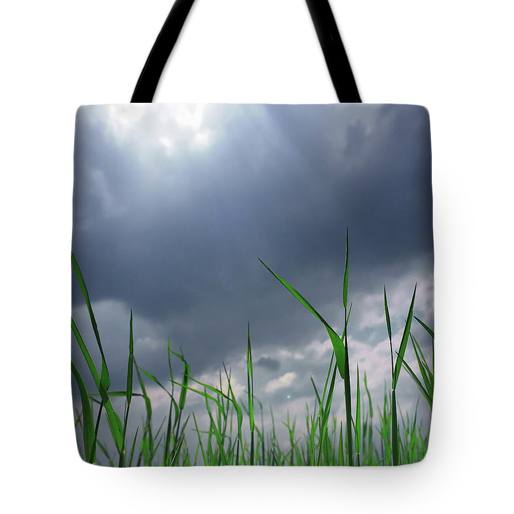 Thunderstorm Tote Bag featuring the photograph Corn Plant With Thunderstorm Clouds by Silvia Otte