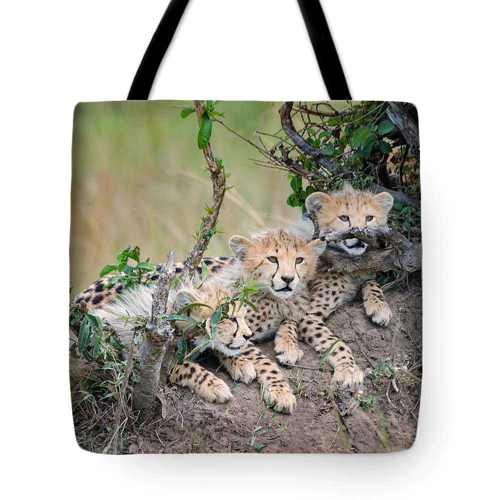 Cheetahs Tote Bag featuring the photograph Curious Kittens by Cheryl Schneider