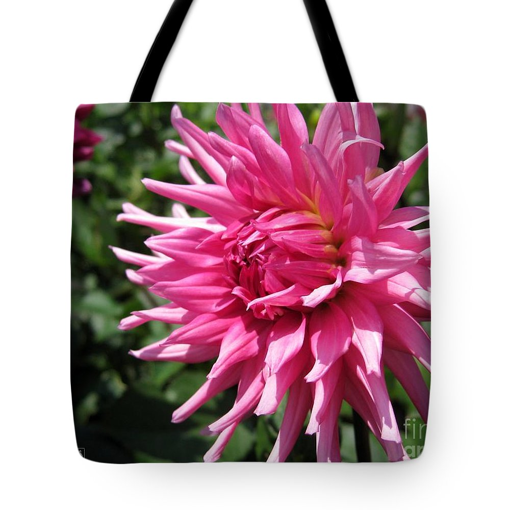 Mccombie Tote Bag featuring the photograph Dahlia Named Pretty In Pink by J McCombie
