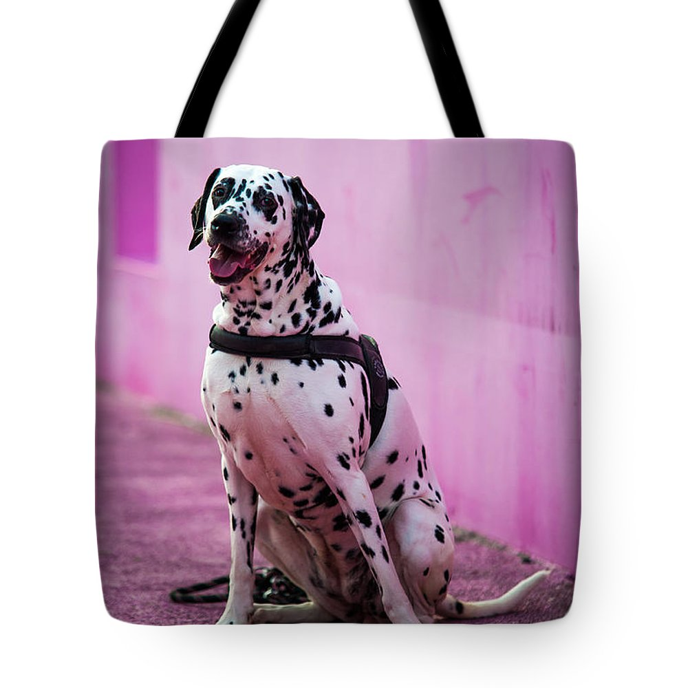 Dalmation Tote Bag featuring the photograph Dalmatian 6 by Martin FF