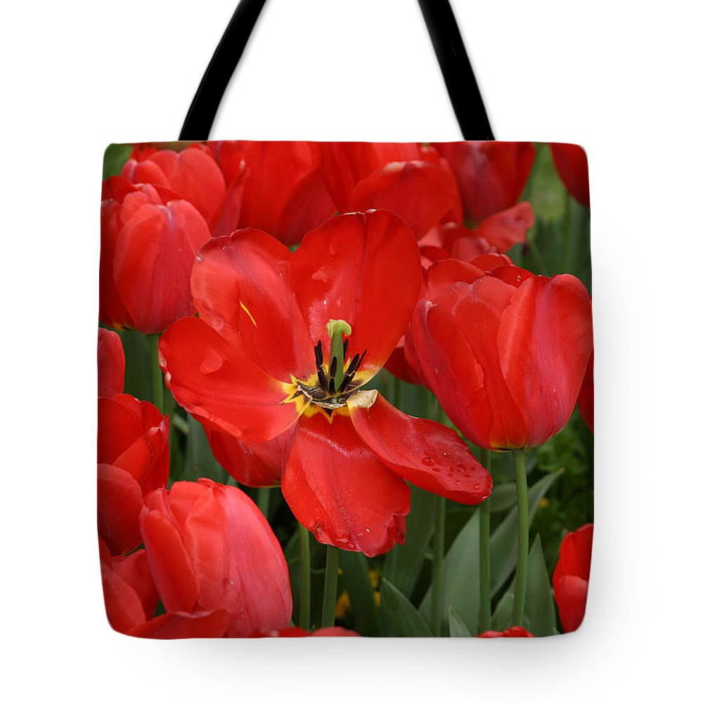 Flowers Tote Bag featuring the photograph Descanso Gardens 6 by Kathy Hutchins