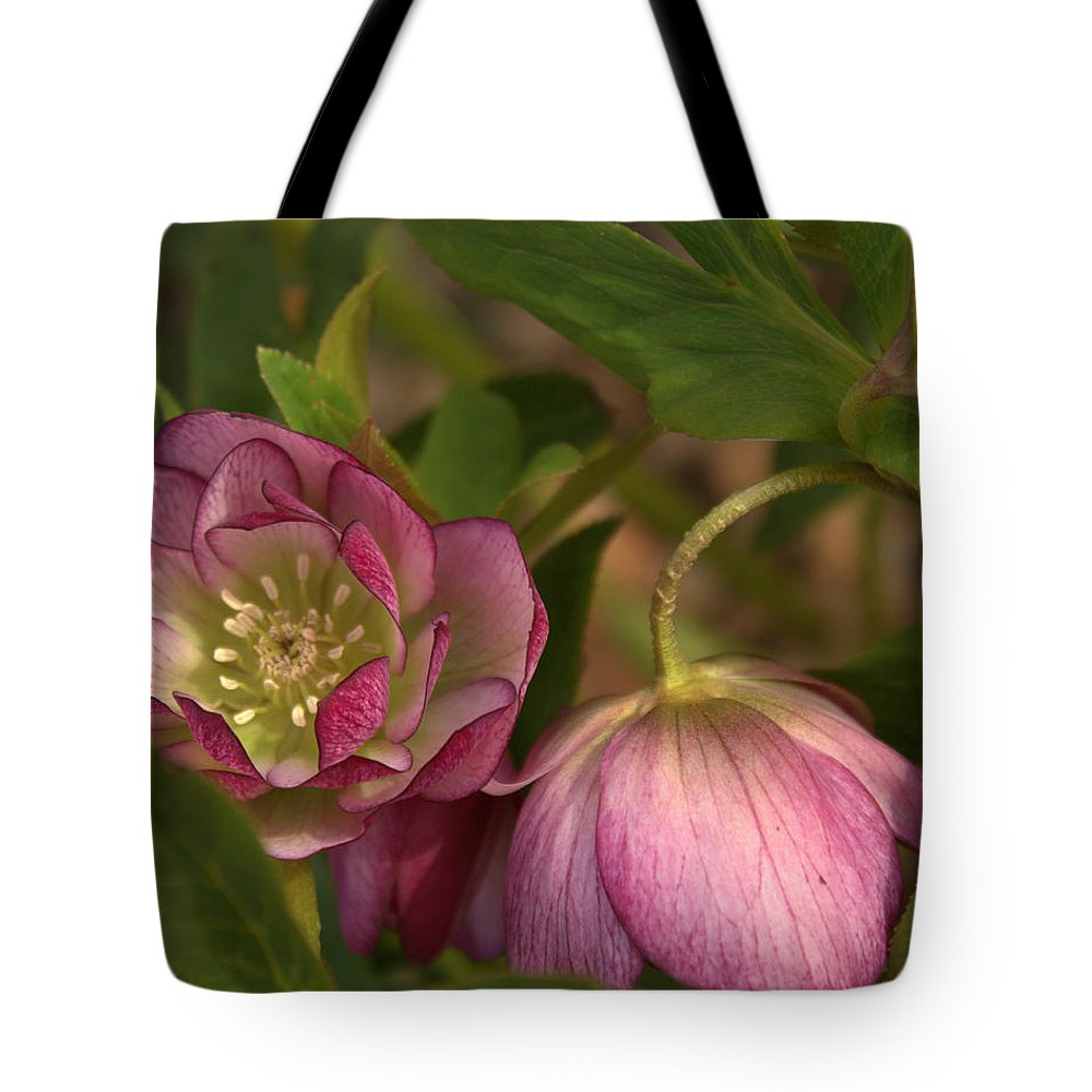 Tote Bag featuring the photograph Double Lenten Rose by Mel Hensley