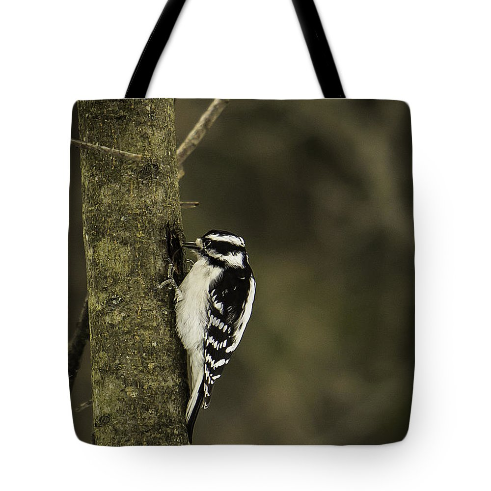 Downy Tote Bag featuring the photograph Downy Woodpecker by Brad Marzolf Photography