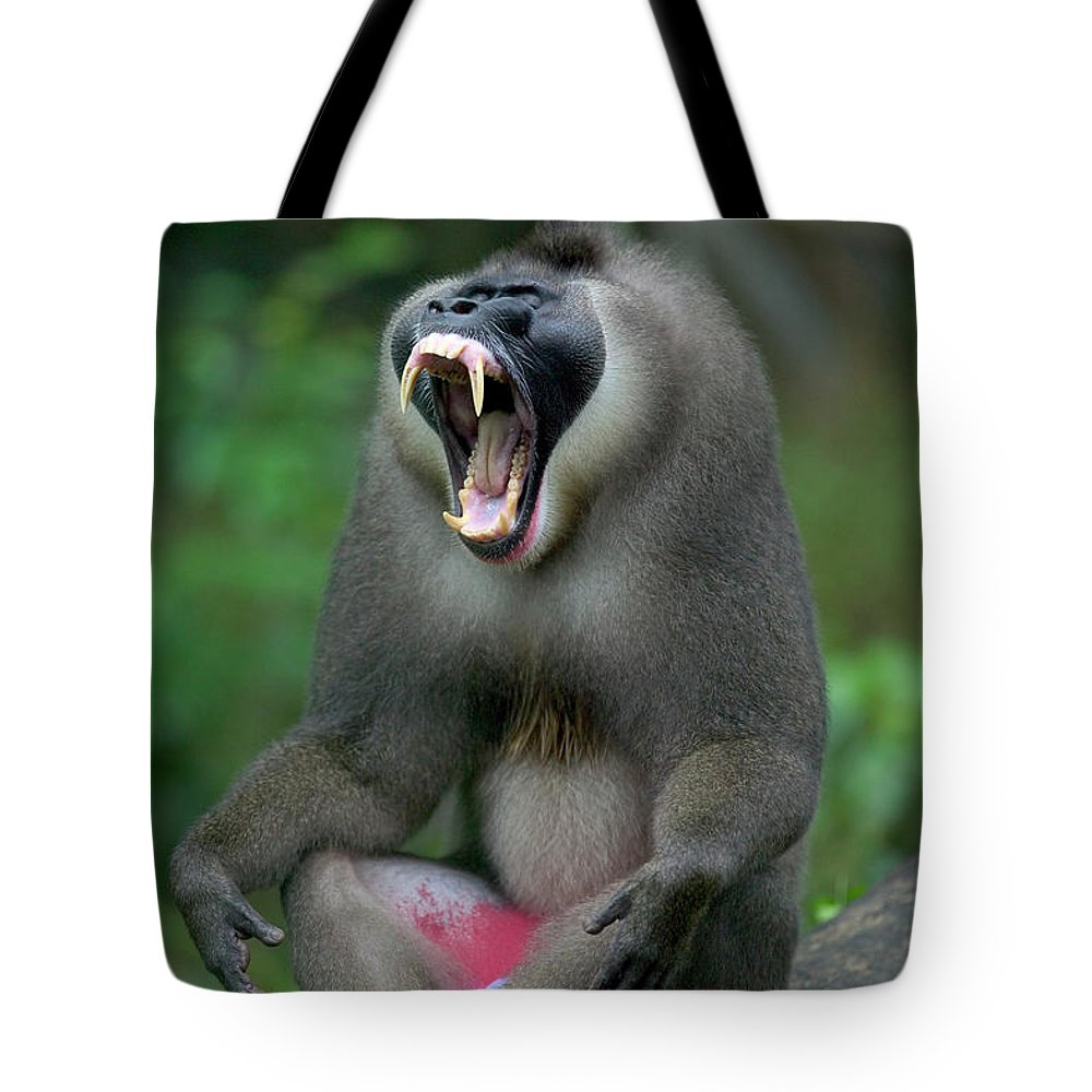Jh Tote Bag featuring the photograph Drill Mandrillus Leucophaeus Adult Male by Cyril Ruoso
