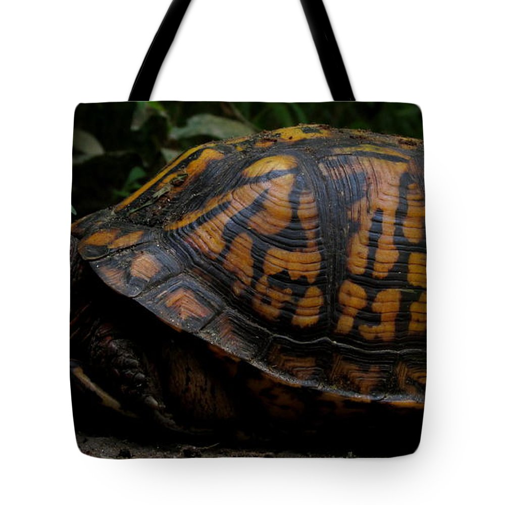Eastern Box Turtle North American Reptiles North American Turtles Wild Animals Of North American Wildlife Chesapeake Biodiversity Forest Creatures Seasonal Woodland Ecosystem Mid Atlantic Region Fauna Colorful Critters Orange Box Turtle Tote Bag featuring the photograph Eastern Box Turtle by Joshua Bales