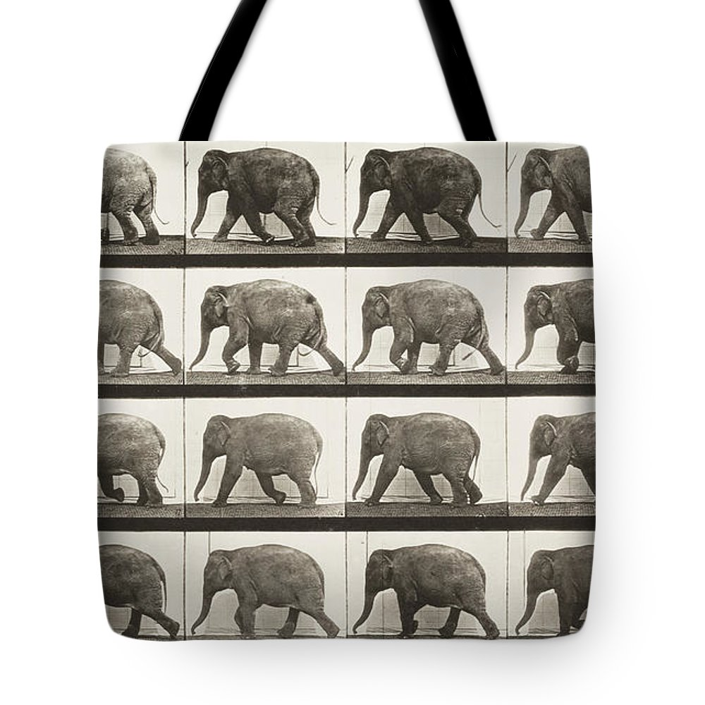 Jumping Tote Bag featuring the painting Elephant Walking by Celestial Images