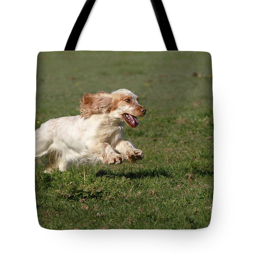 English Cocker Tote Bag featuring the photograph English Cocker Spaniel by Jean-Michel Labat