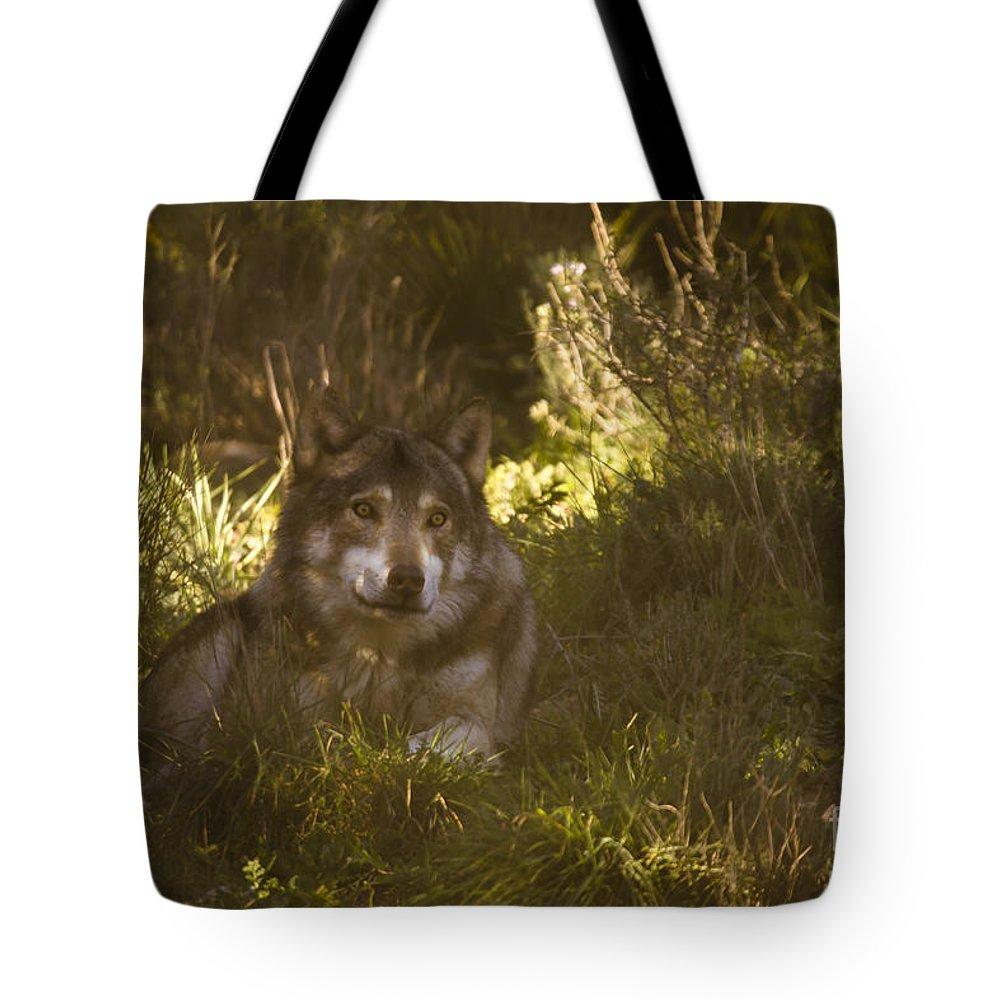 Lobo Park Tote Bag featuring the photograph European Wolf by Angel Ciesniarska