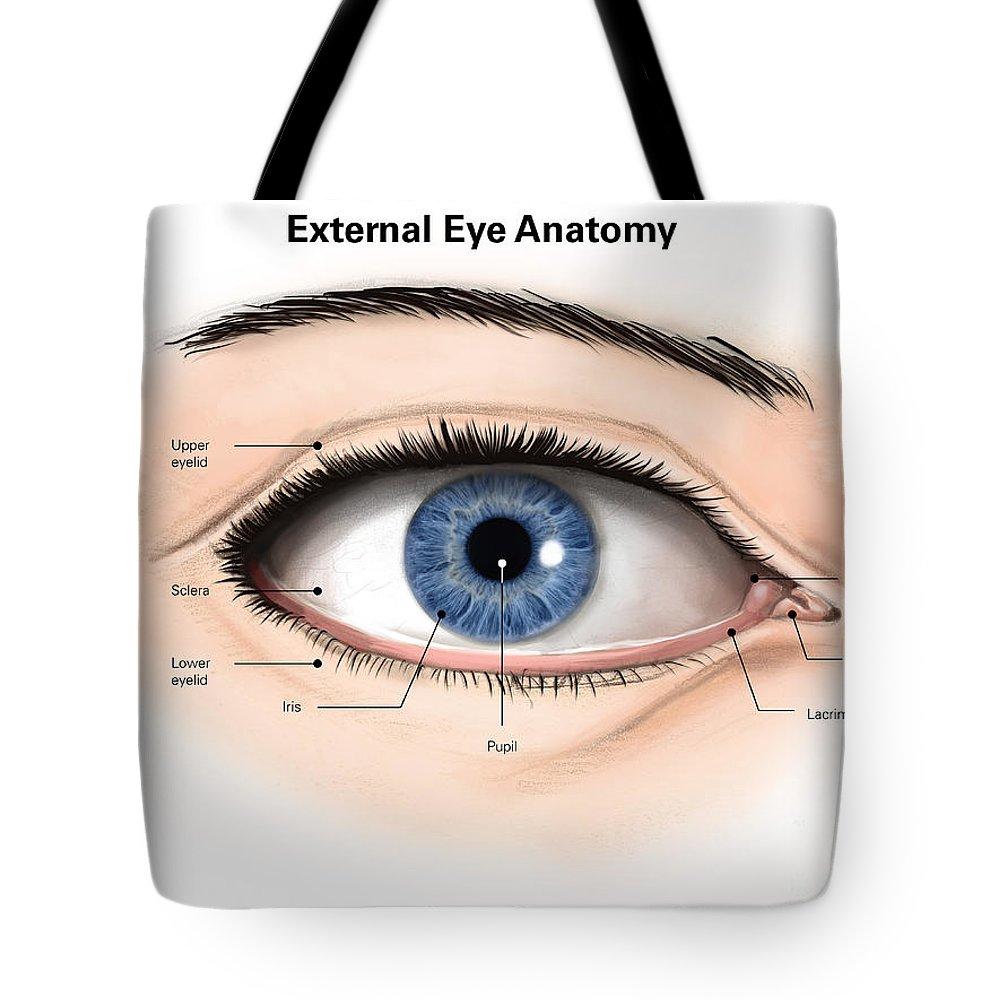 External Anatomy Of The Human Eye Tote Bag For Sale By Alan Gesek