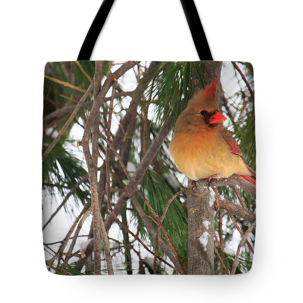 Cardinal Tote Bag featuring the photograph Female Cardinal by Everet Regal