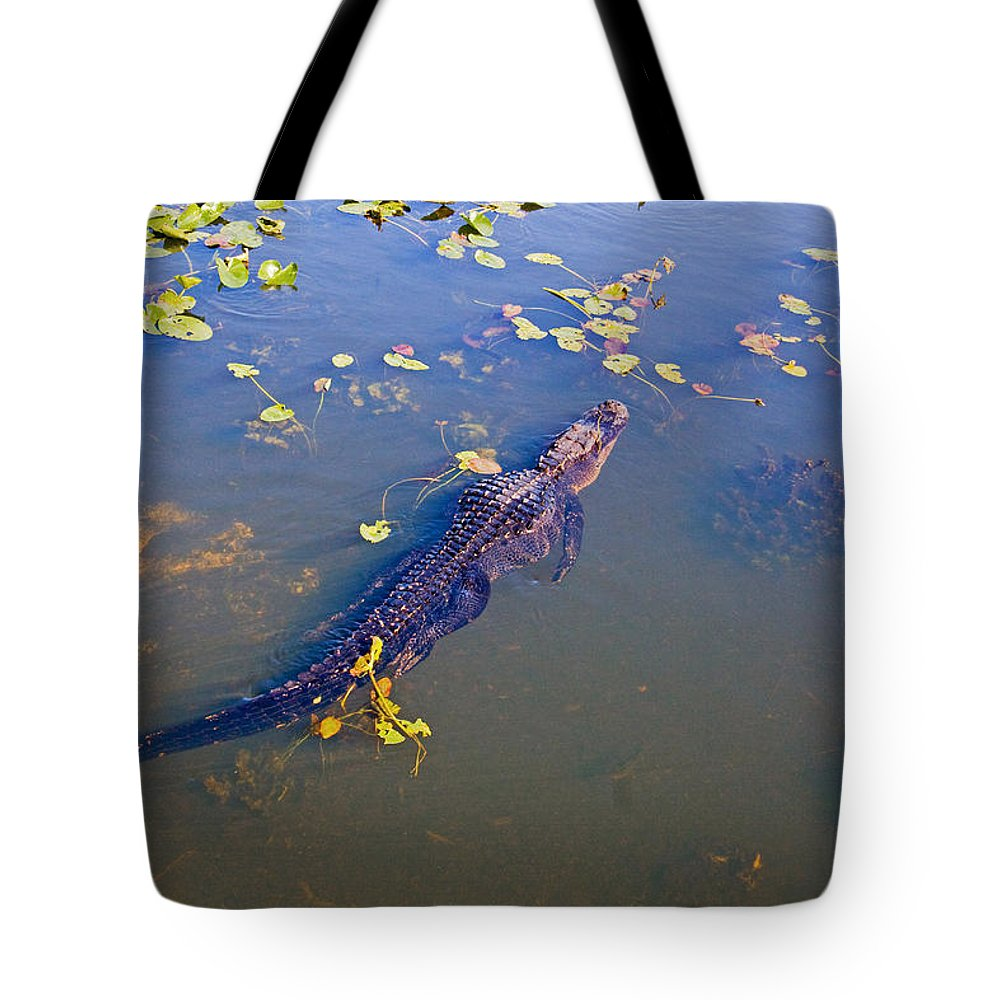 Alligator Tote Bag featuring the photograph Florida Alligator by Manuel Lopez